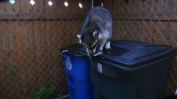Garbage - LOC Keeps Animals Out! - For Hinged Trash Can- sec